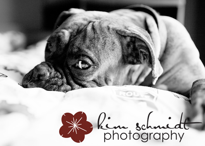 Conner the Boxer Dog